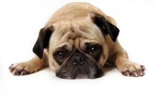 sad-dog-350x232