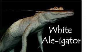 white-aleigator